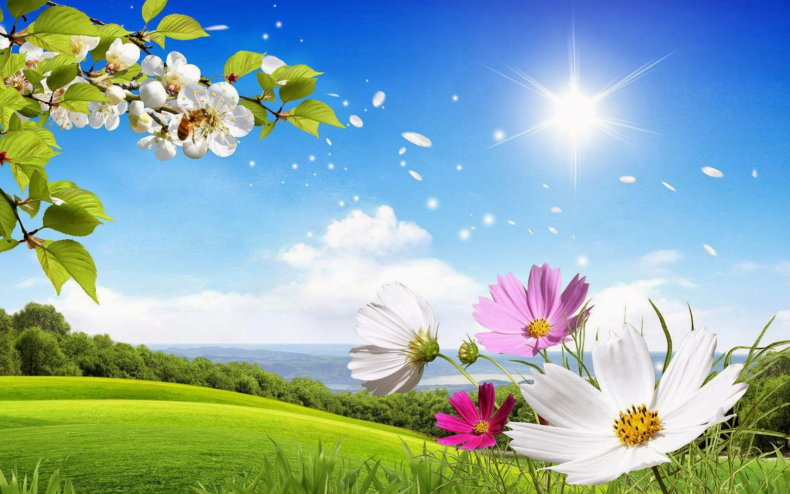 foto-zomer-wallpapers-hd-zomer-achtergronden-34-landschap-weiland-gras-bloemen-blauwe-lucht-zon